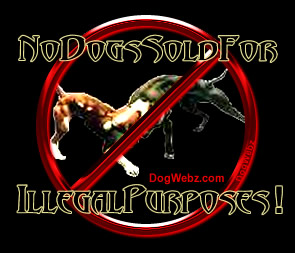 No Dog Sold For Illegal Purposes